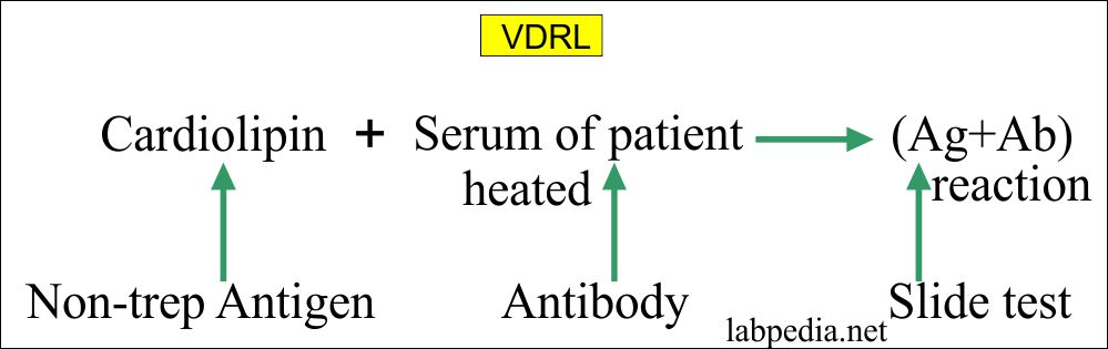 Principle of VDRL test
