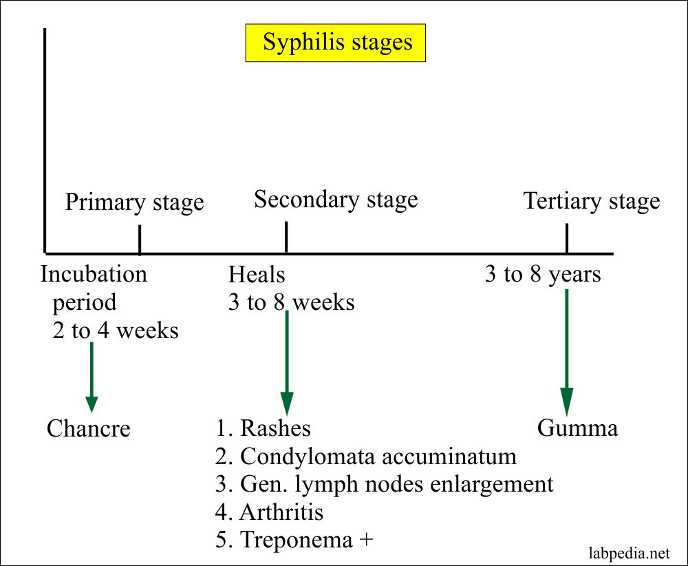Syphilis Clinical various stages and Symptoms