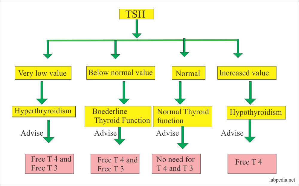Thyroid – Part 2 – Thyroid stimulating hormone (TSH), Thyrotropin