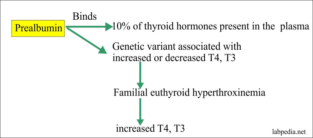Thyroid Part 4 Thyroxine Binding Prealbumin Tbpa