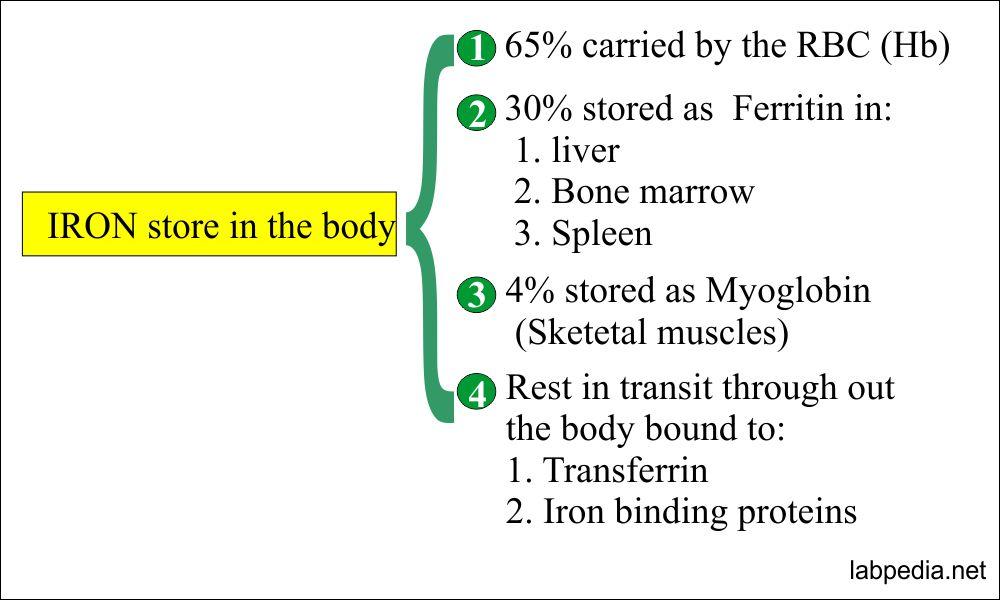 Iron storage in the body