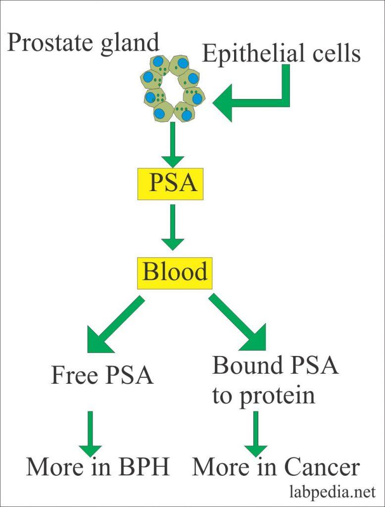 Prostatic specific antigen and types