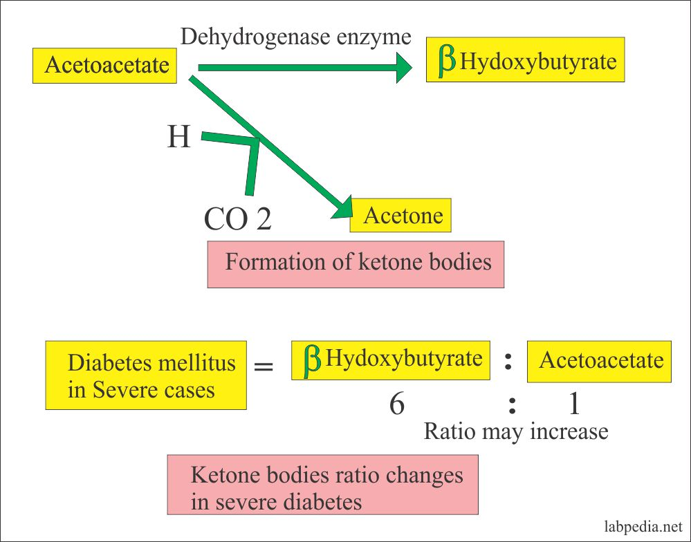 Mechanism of Ketone Body formation and their ratio