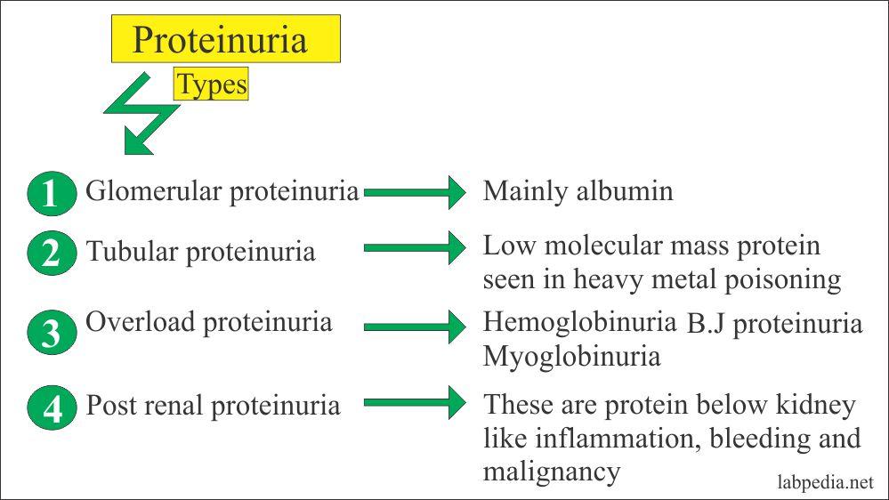 Types of proteinuria