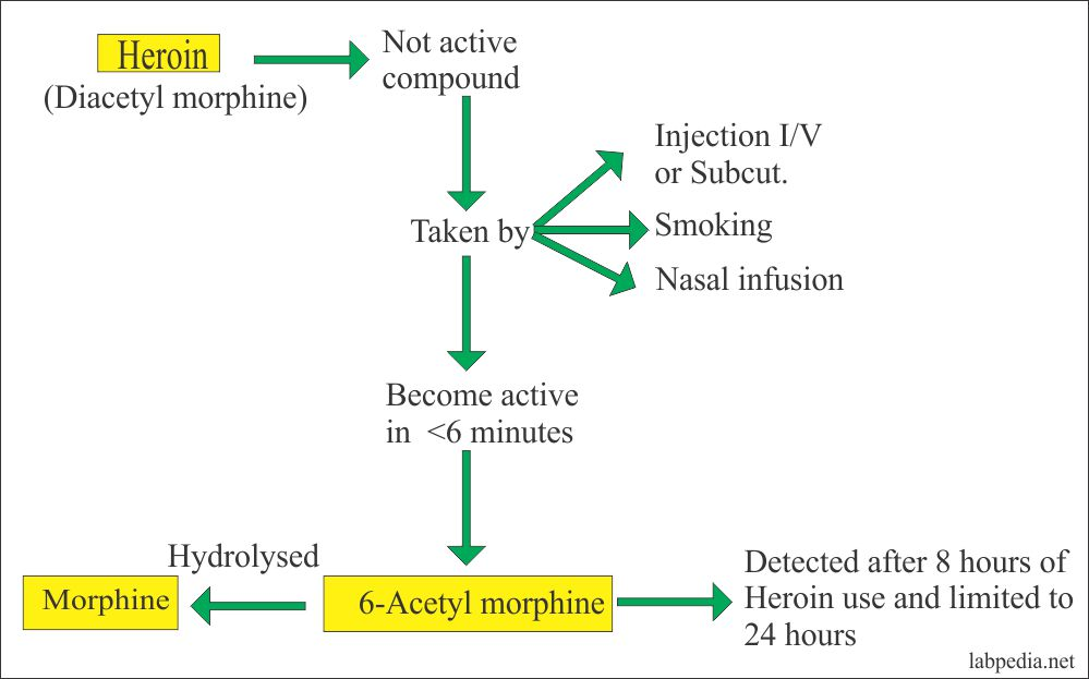 Heroin and Morphine routes of intake