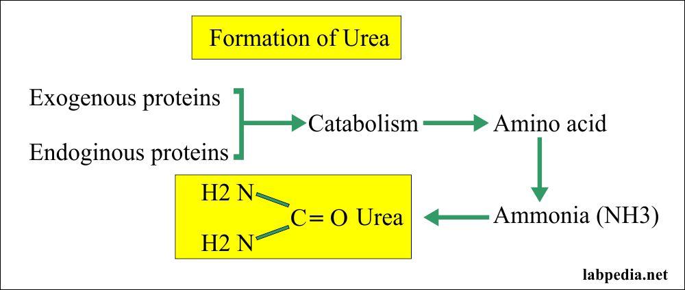 Source of Urea formation