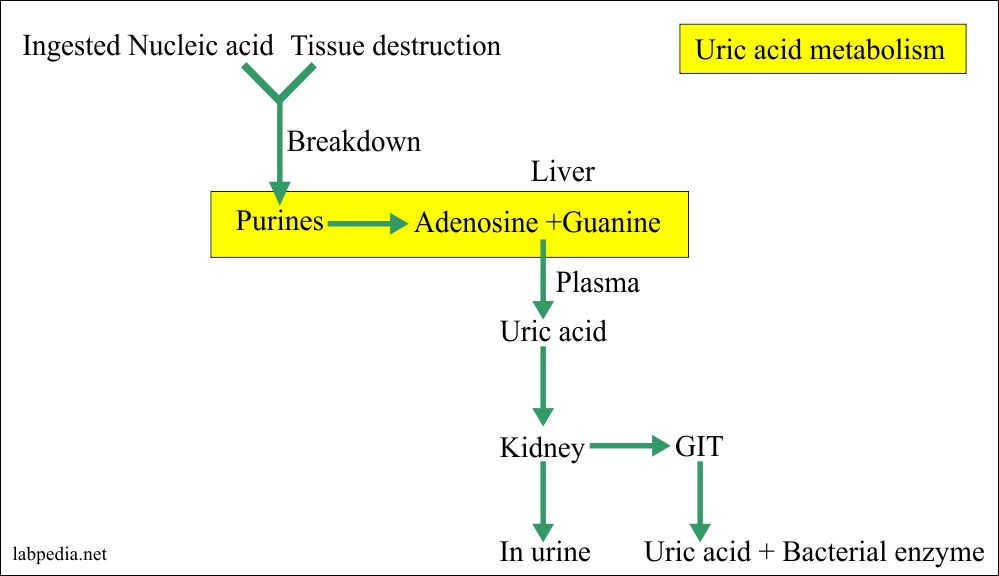 Urine Part 2:- uric acid  Quantitative (24 hrs Urine Sample), Uricosuria