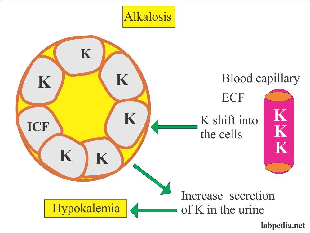 Potassium in Alkalosis