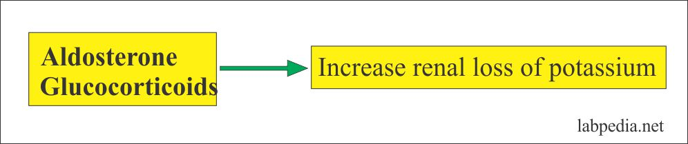 Role of Aldosterone on Potassium loss