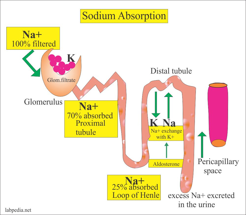 Proteinuria causes and classification