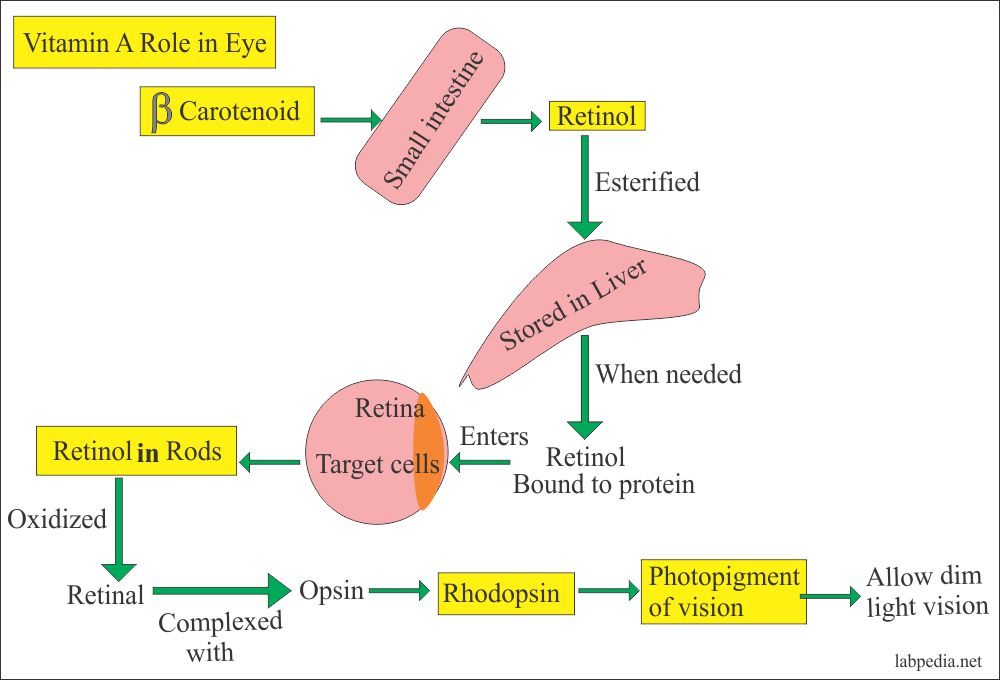 Vitamin A role in eye