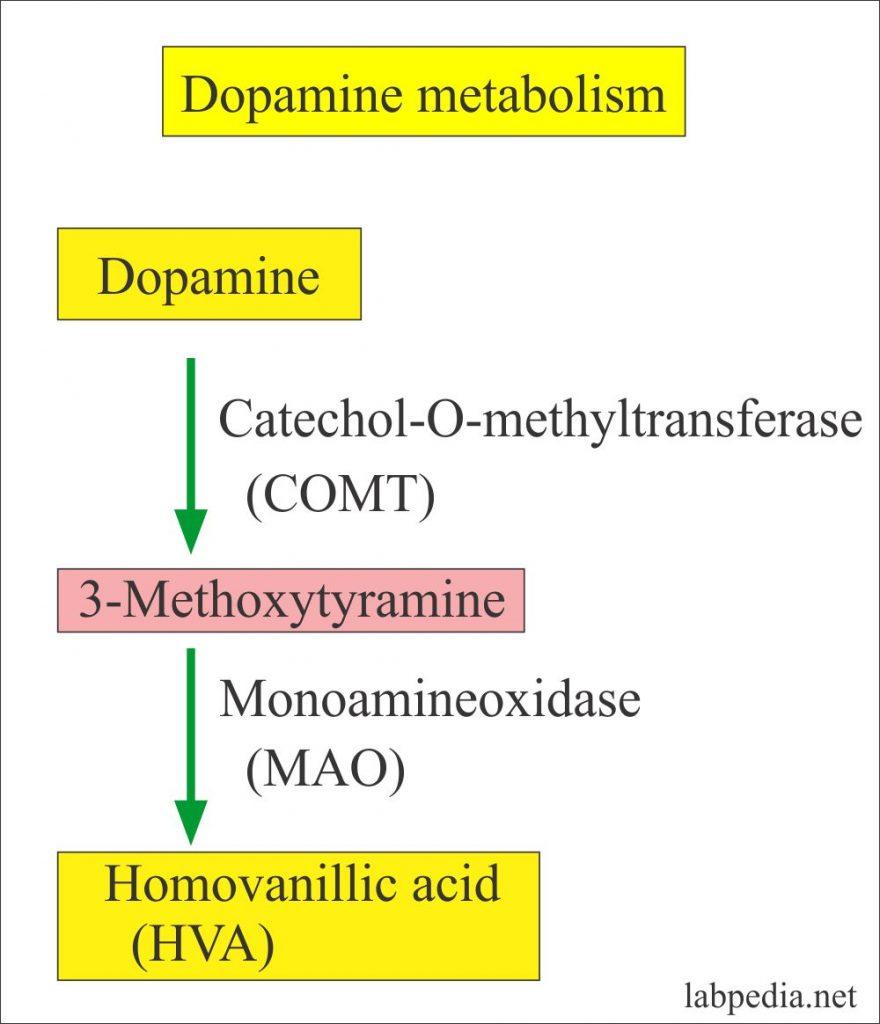 Urine Part 24:- VMA (Vanillylmandelic acid), Catecholamines (24 hours urine), Neuroblastoma