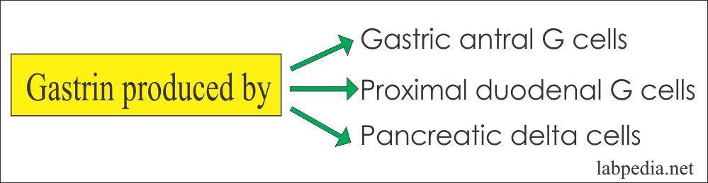 Sources of Gastrin