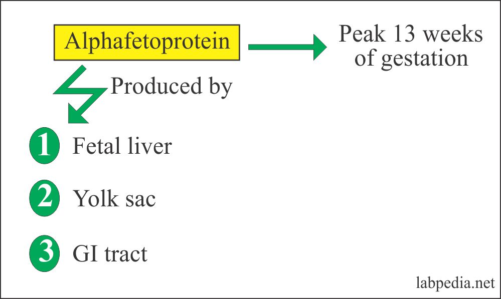 Tumor Marker – Part 12 – Alpha-Fetoprotein (AFP)