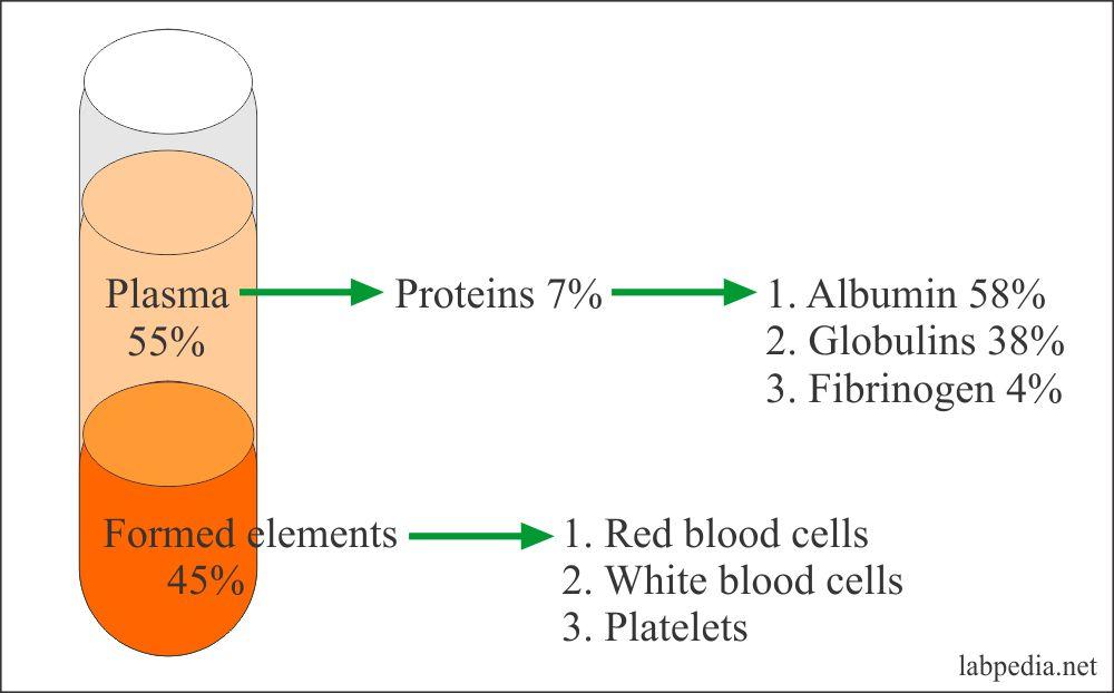 Protein ratio in the plasma