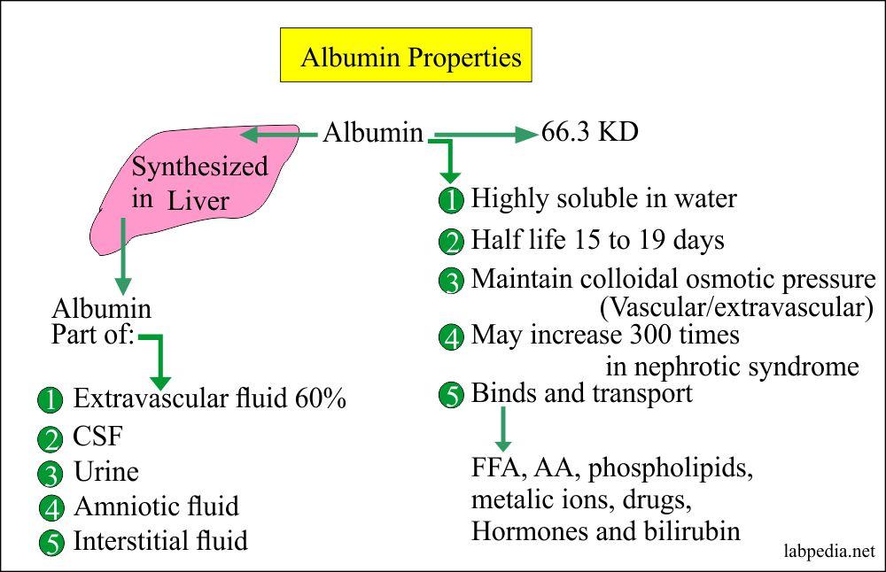 Albumin properties