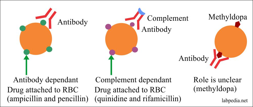 Autoimmune hemolytic anemia pathogenesis