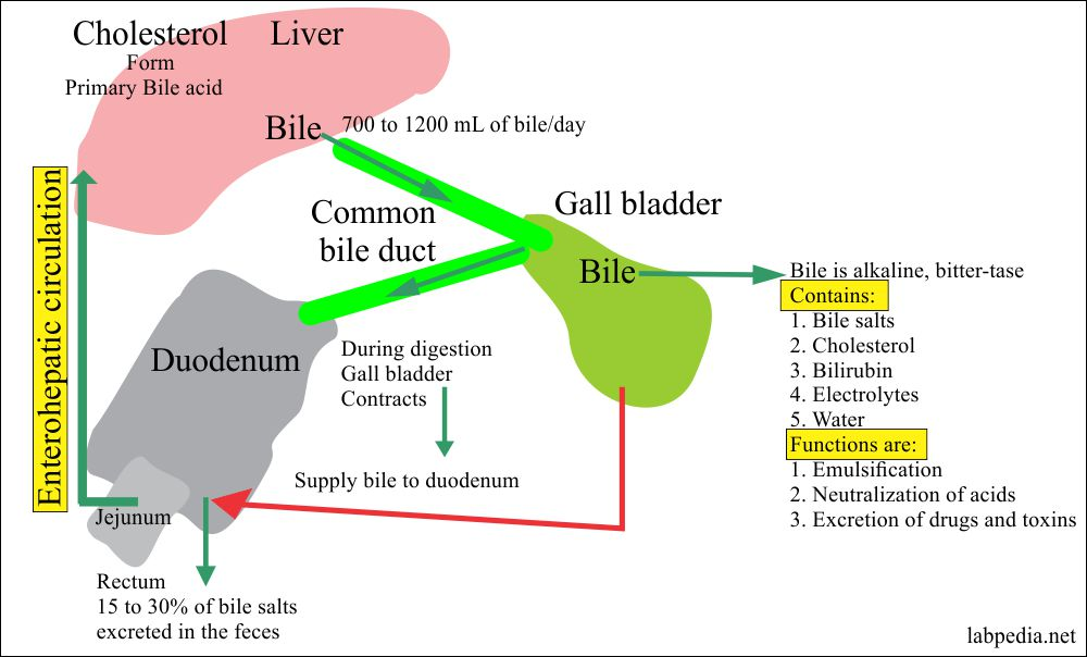 Bile acid metabolism