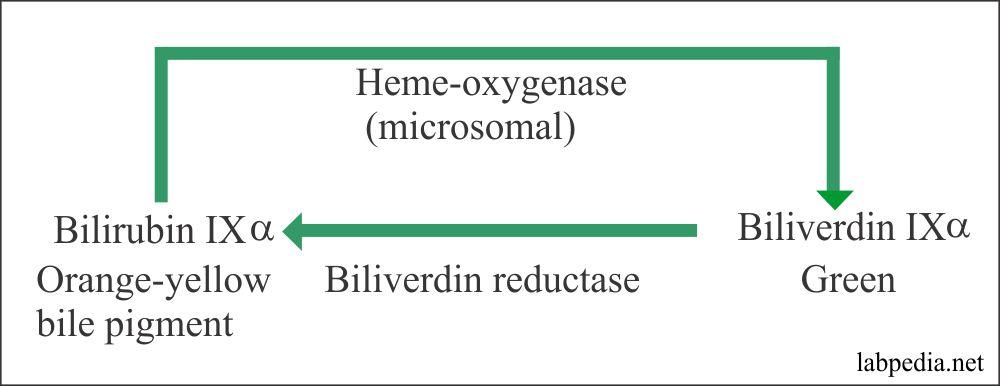 Bilirubin IX reaction