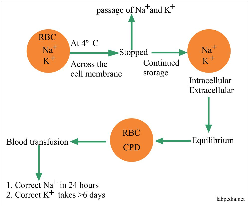 Na+ and K+ equilibrium in RBCs