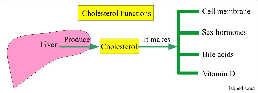 How to control Cholesterol