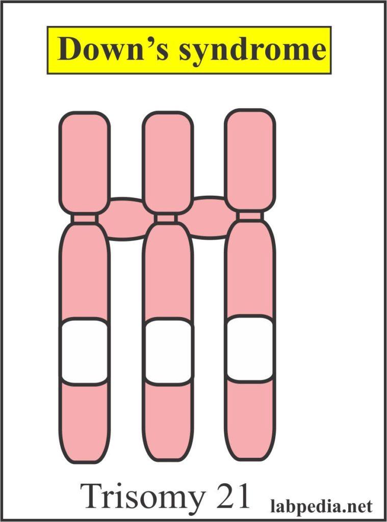 Tumor Marker – Part 8 – Alpha-Fetoprotein (AFP), α-Fetoprotein
