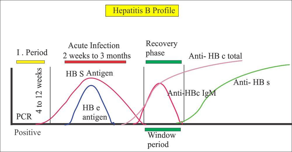 Hepatitis B virus profile