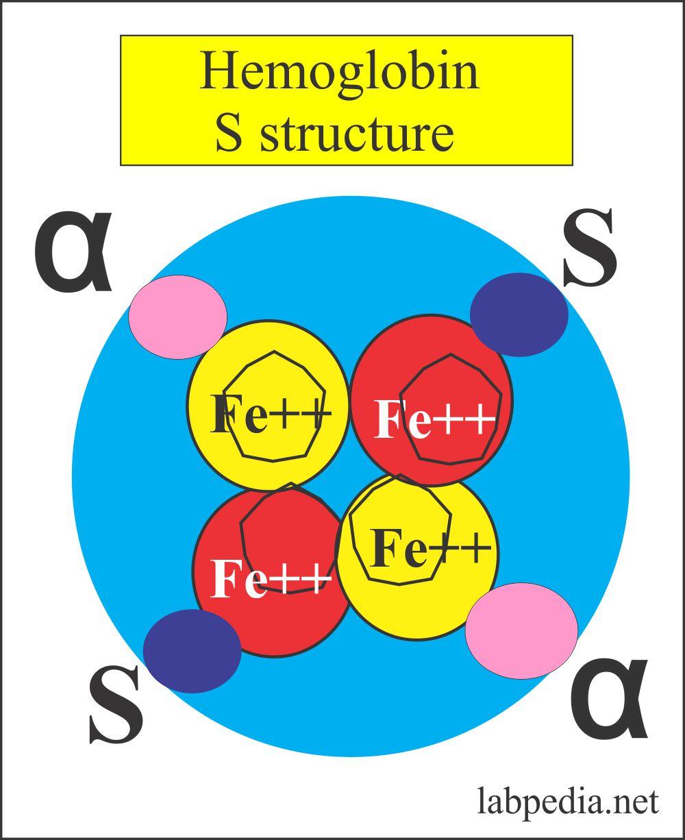Hb S (Homozygous) structure