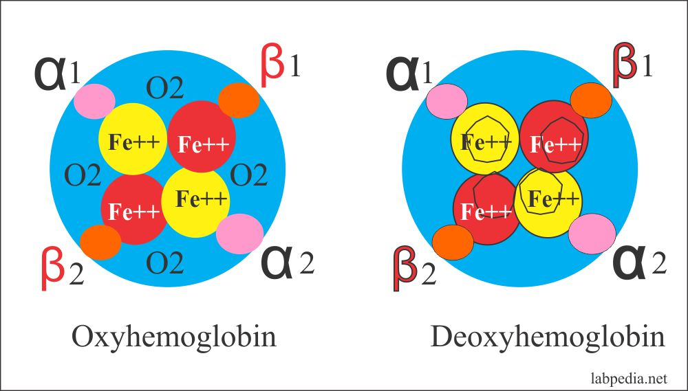 Oxyhemoglobin Deoxyhemoglobin