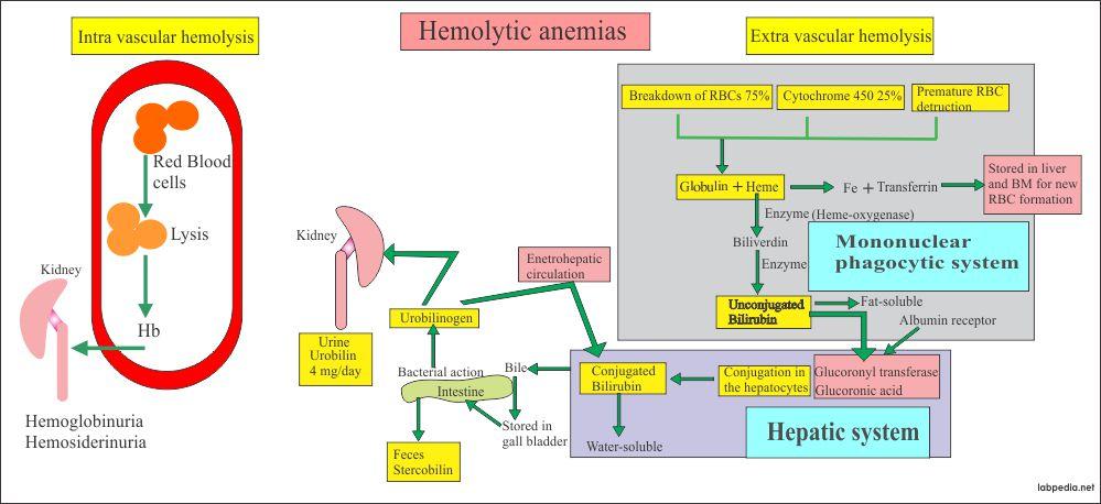 Hemolytic anemia causes
