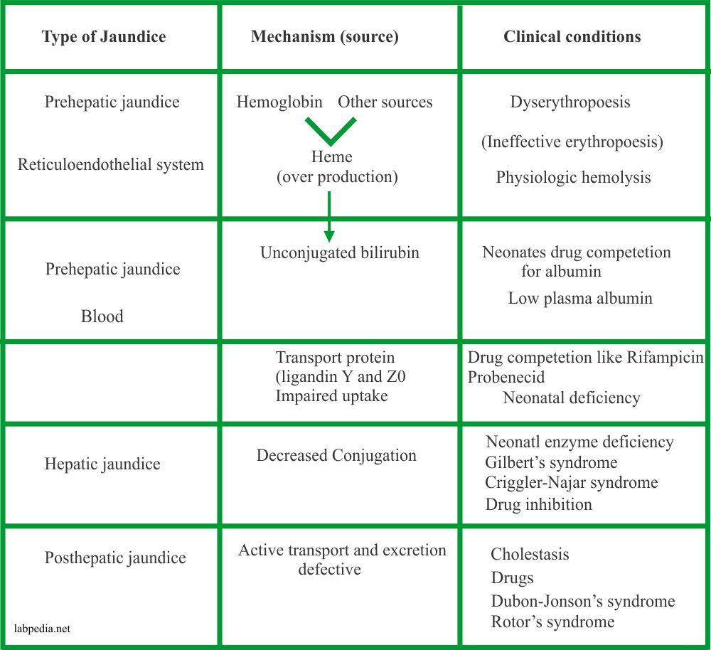 Jaundice etiology and classification