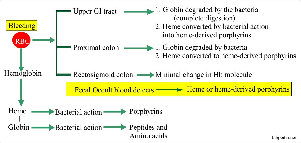 Occult blood G I tract bleeding pattern