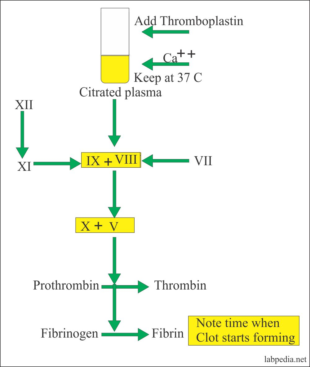 Prothrombin Test Principle