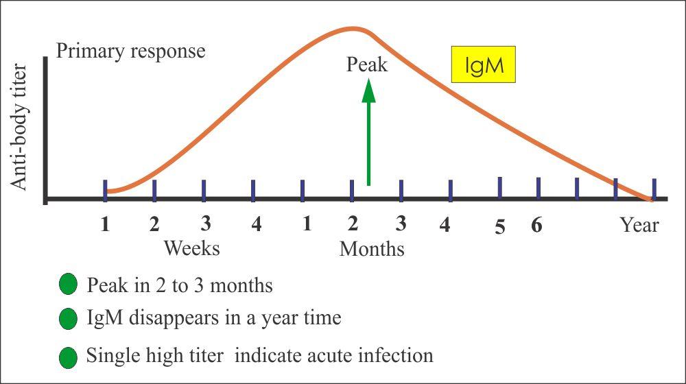 Toxoplasma IgM antibody (serology)