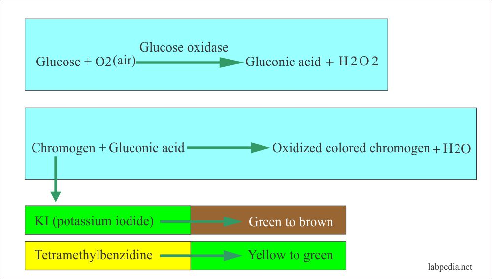Urine glucose oxidase method principle