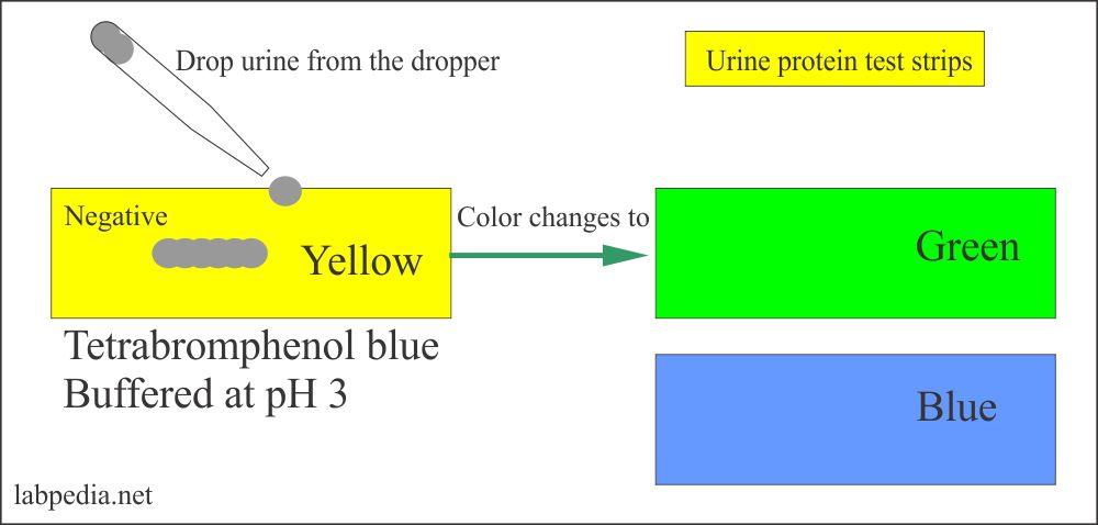 Urine protein reagent strips