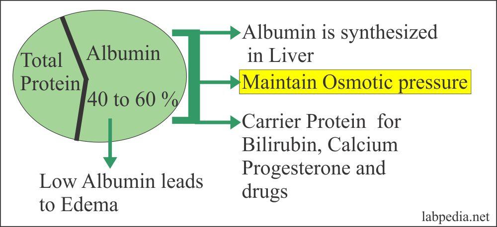 Albumin Functions