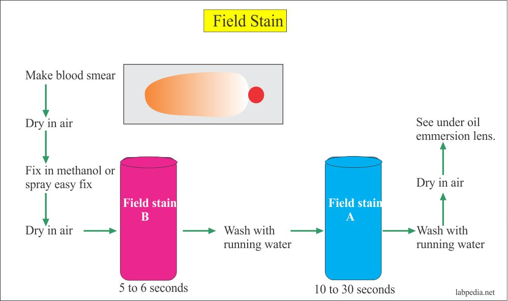 Solutions:- Part 6 – Field Stain A and B,  Preparation of the solution
