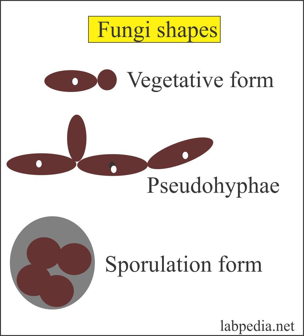 Fungus shapes
