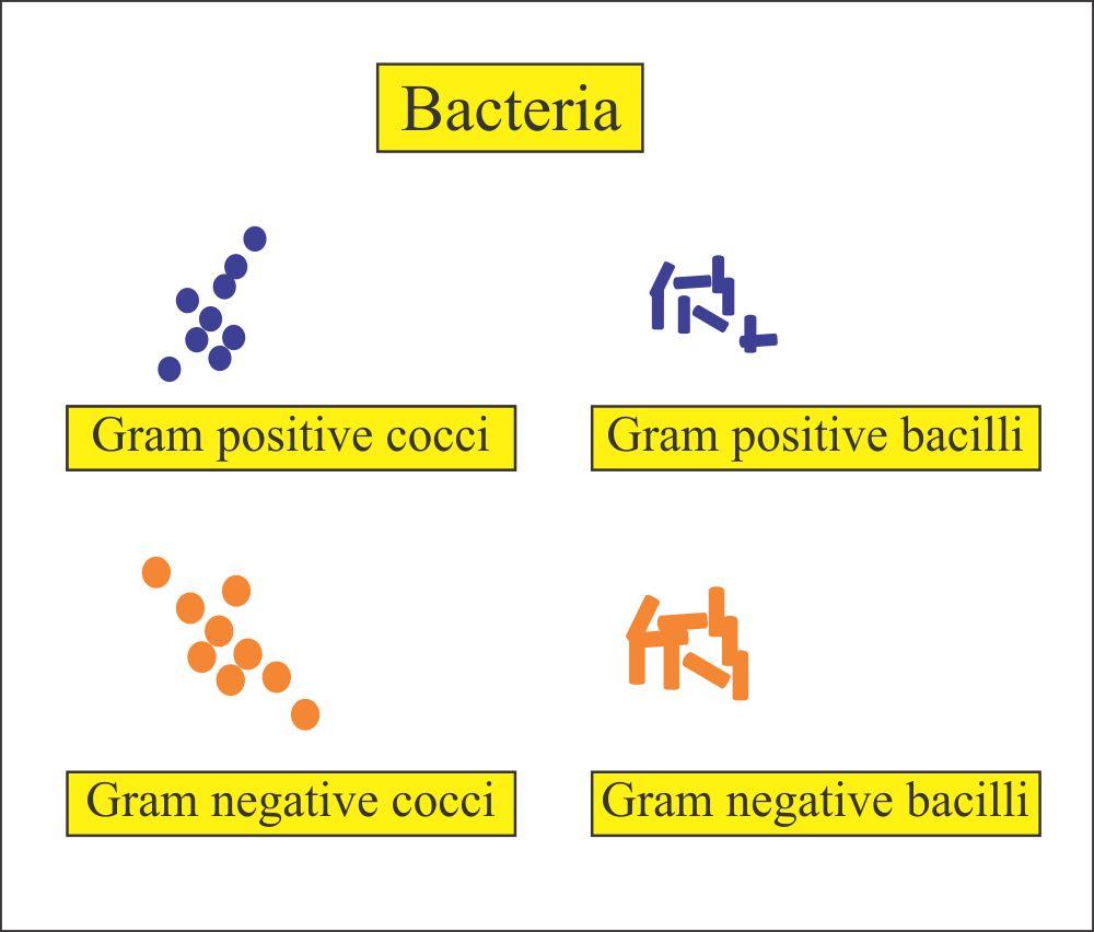 Gram negative and posit bacteria