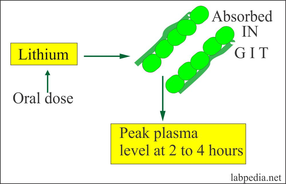 Lithium Absorption From the GIT
