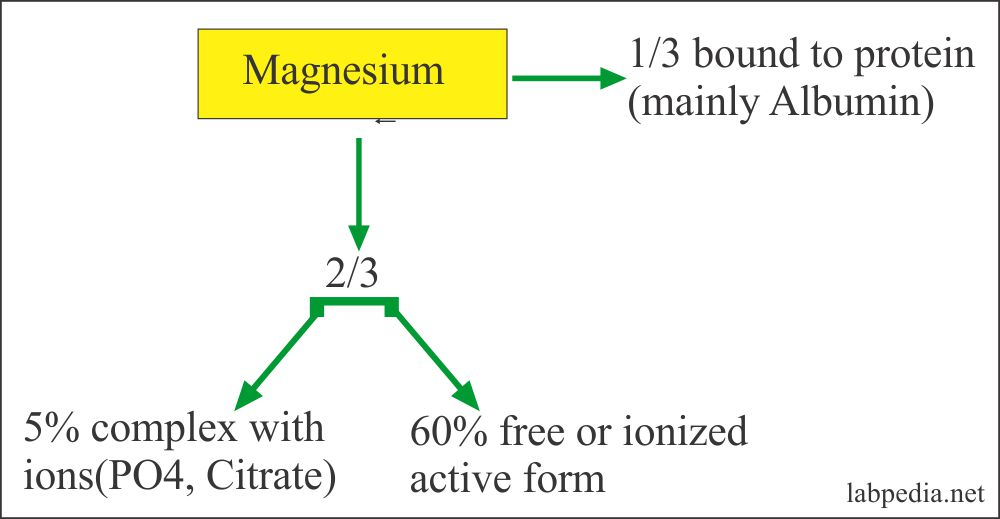 Magnesium Distribution in the Body