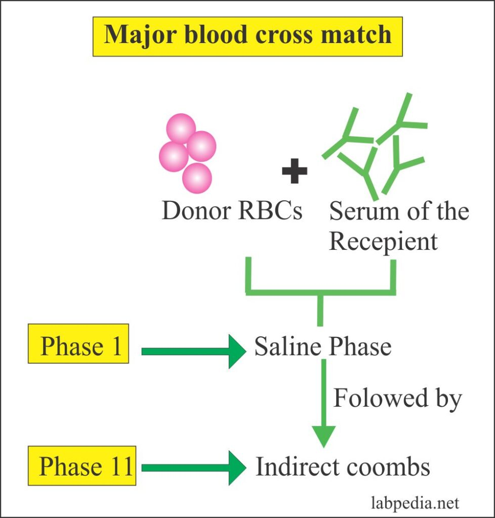 Major cross match blood