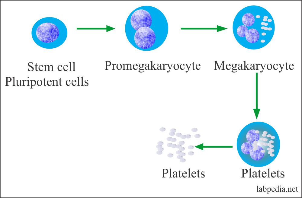 Platelets – Part 2 – Platelets Count (Thrombocyte count)