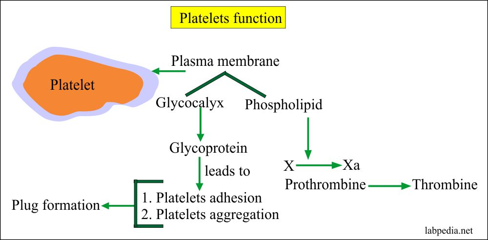 Platelets functions