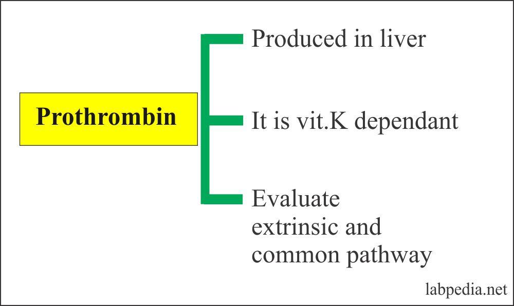 Prothrombine functions