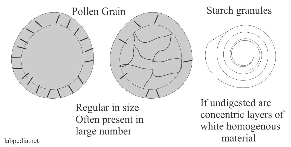 Stool pollen grain and Starch