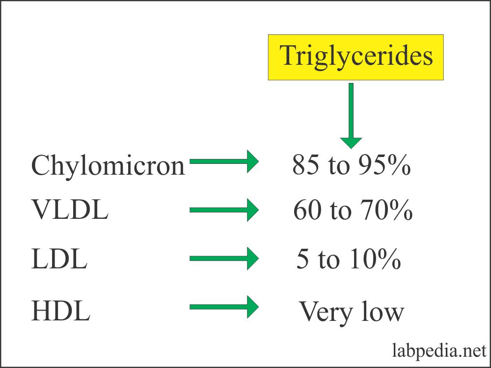Composition of Triglyceride