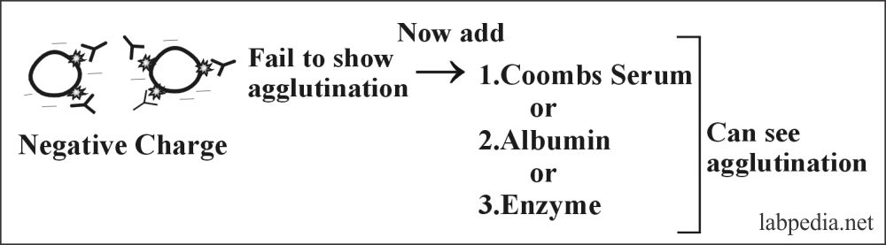 Fig 102: Coomb's Test