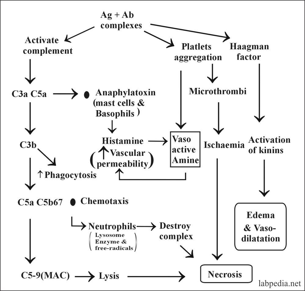 Fig 105: Mechanism of Immune Complex disease